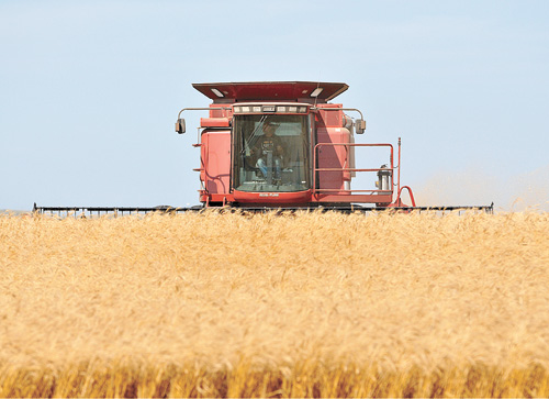 Like many area farmers, Jason Rabenberg of Glenham was busy harvesting wheat on Monday. Rabenberg got a late start and had slow going at times due to damp conditions in the morning, but as noon approached he was making good progress. He said the crop in this field was the best he'd ever seen.